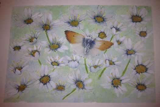 Butterfly with Daisies by Beckwee