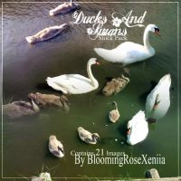 Swans And Ducks Stock Pack by BloomingRoseXeniia