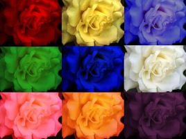 PoPart roses by Cloud-and-Petrichor