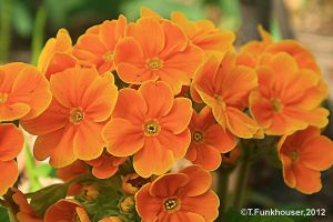 color explosion by Digital3dRealm