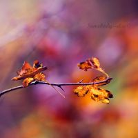 Les couleurs de Novembre by Somebody--else