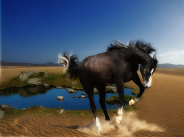 .:Prince of the Desert:. by WhiteSpiritWolf