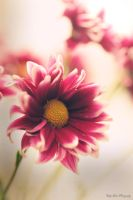 Remembrance by MyLifeThroughTheLens