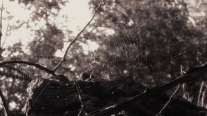 Nature's Web by josafisch