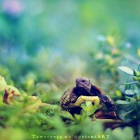 Fury the Tortoise by GiuliaDepoliART