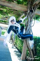 YC14 - Black Cat by BlizzardTerrak