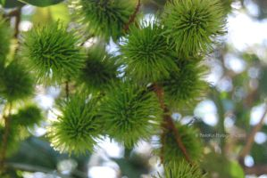 Photography : Ever Green by PaulaKun