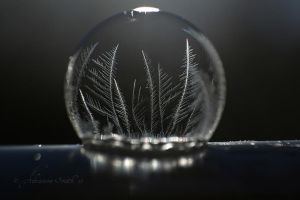 Freezing by Roses-to-Ashes
