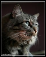 Kitty Kitty Sioux Sioux by thebryancrump