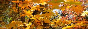 Fall Leaves by joshjacoby