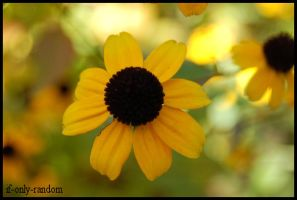 yellow and green 2 by if-only-random