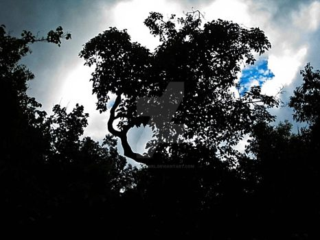 Tree Silhouette at Fern Grotto by Utukki-Girl