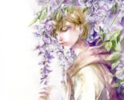Wisteria by Charlotte-Exotique