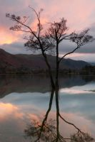 Tranquil by pnewbery