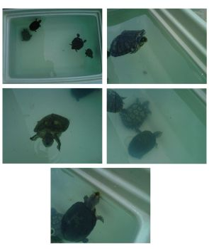 Caring for turtles by renacer87