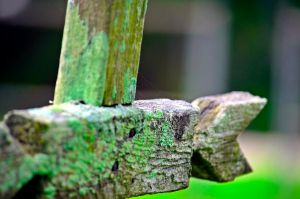 Wooden Cross by aggie00