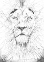 Lion Pencil Drawing by ART-BY-DOC