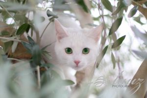 green eyes by lauzphotography