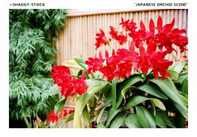 034 - Japanese Orchid Scene by shaggy-stock