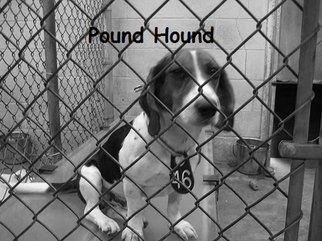 Pound Hound Preview... by RJ8
