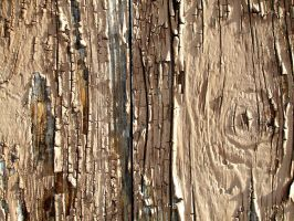 Wood Texture 12 by Aimi-Stock