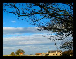 Tree Without Leaves 02 by celeste