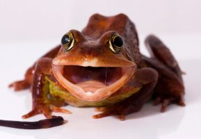 Funny face from a frog by AngiWallace