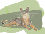 Abyssinian by mr-Svip
