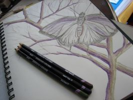 Moth in the trees by SxySam