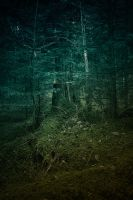 into the wild #04 by t3hr