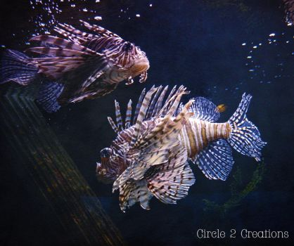 Lion Fish by Circle2Creations