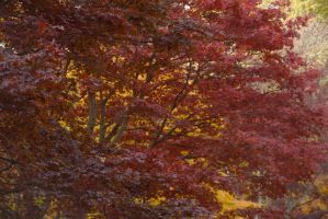 Red Color, November In the Arnold Arboretum by Miss-Tbones