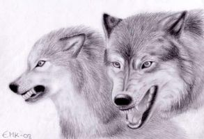 Angry wolves by Elkenar