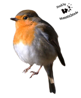 Cut-out stock PNG 102 - proud robin 2 by Momotte2stocks