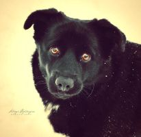 Gold-eyed puppy. by Lukreszja