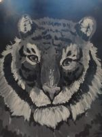siberian tiger by jitterfly