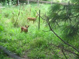 Orphaned Fawns 1 by Windthin