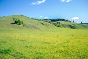 Large Green Field by oddmountain