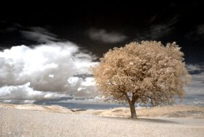 The tree - IR photo by rott-man