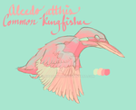 Common Kingfisher by ribbonworm
