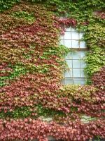 Autumn wall by GerdElise