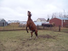 Cece Being Crazy Stock Image #5 by Amber-Loves-Horses