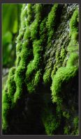 Moss by MarcWasHere