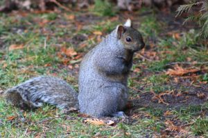 Even my nuts are cold by KeswickPinhead