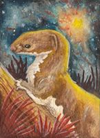 Weasel at Dusk ACEO by Redwall151