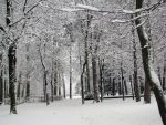Place 276 -in the white forest by Momotte2stocks