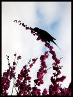 Birds Love Sakura - 1 by Lilithia