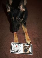 Sam's GSD sign! by t3hsilentone