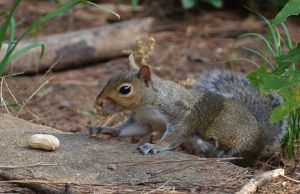 Gotta have that nut 10-9-14 by Tailgun2009