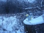 Derpy in the Snow (Pic 2) by zacorasfollower